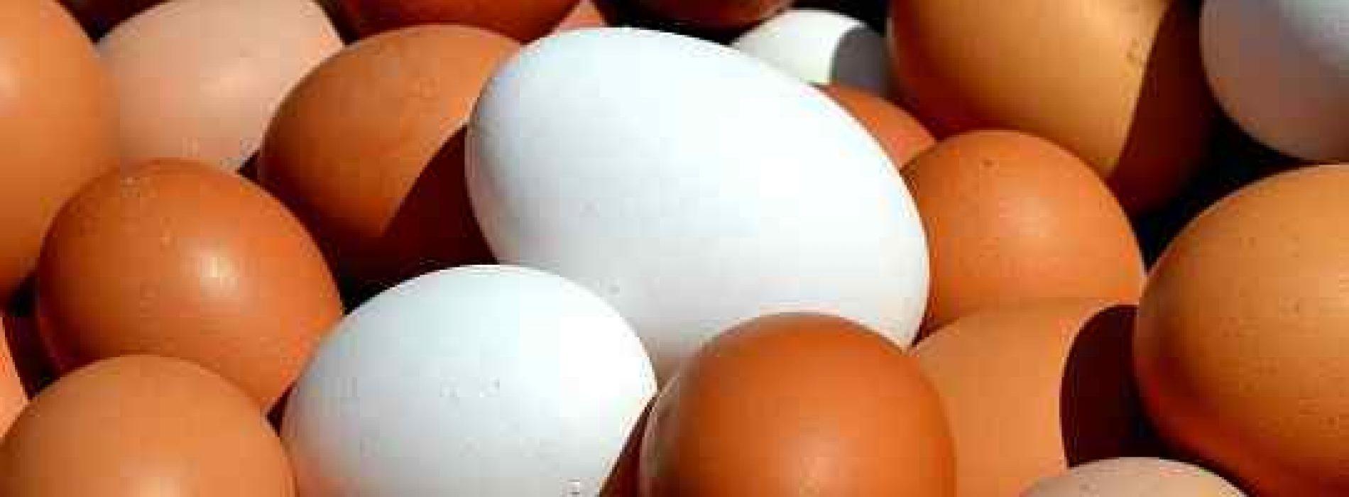 Hvor mange kalorier er det i et egg?