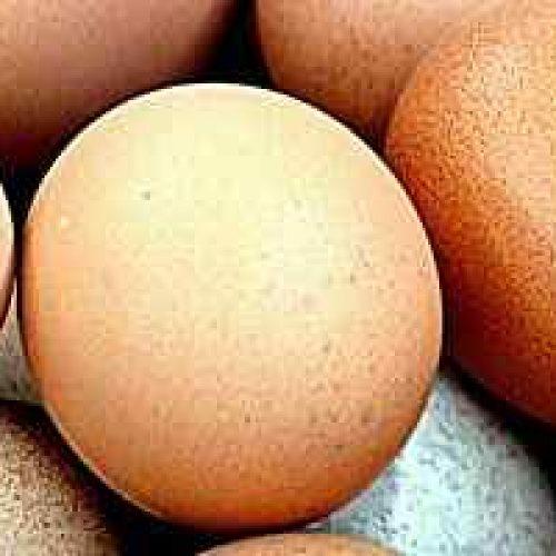 Hvilket næringsinnhold har egg? (Plommen er en næringsbombe)