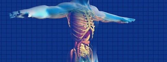 Hvilke oppgaver har fett i kroppen?