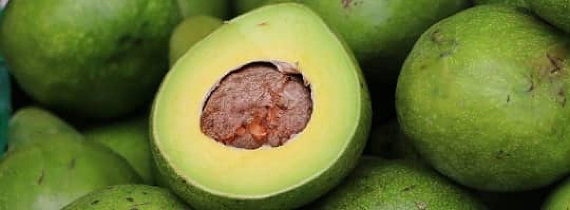 Hvilket næringsinnhold har avokado?