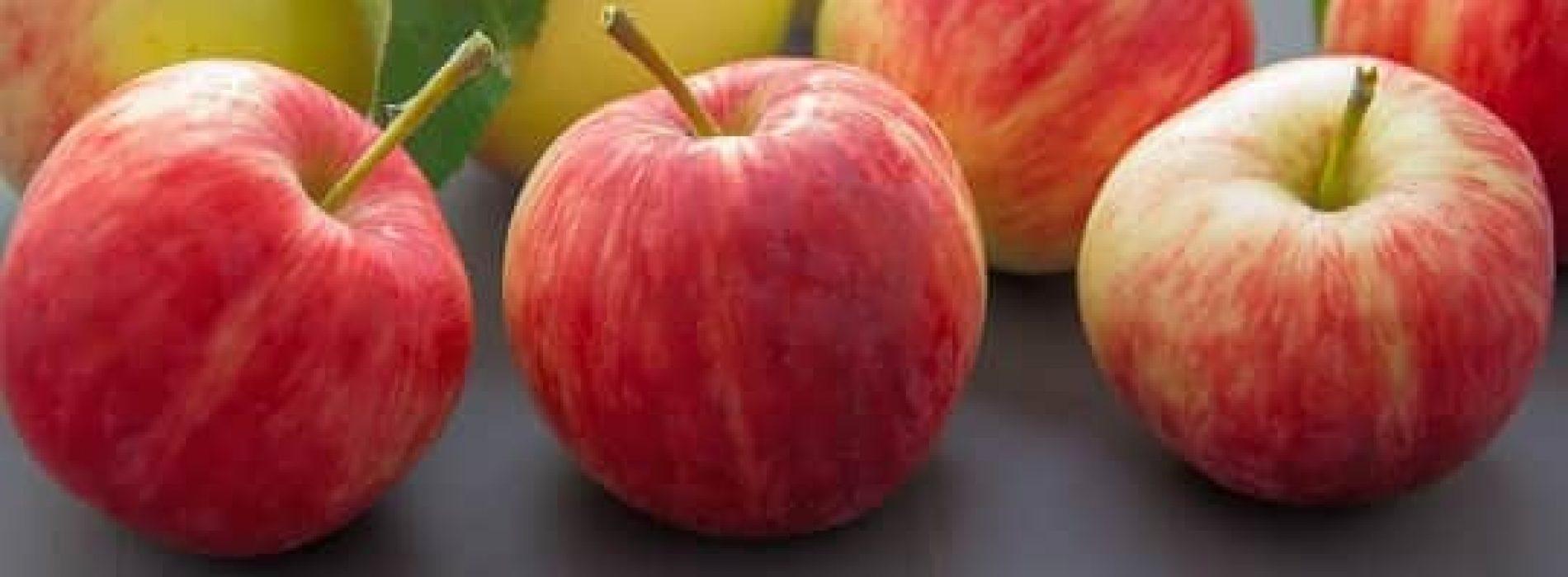 Hvilket næringsinnhold har eple?