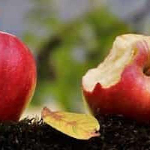 Hvor mange kalorier er det i et eple?