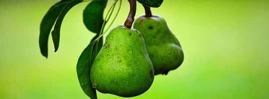 Hvor mange kalorier er det i en pære?